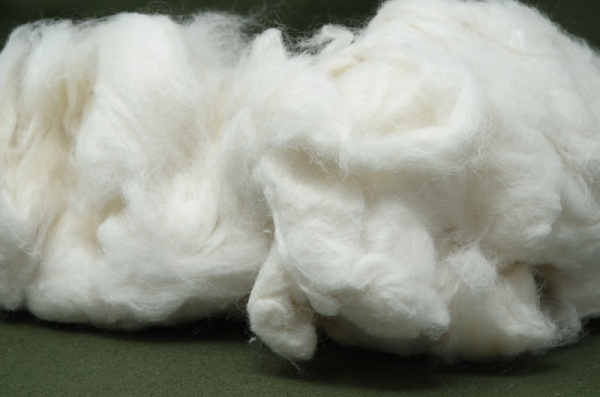 Cotton, Carded WCC